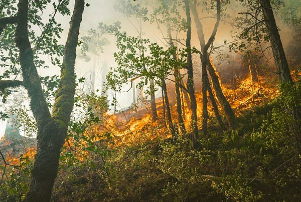 using drones in forest fire response