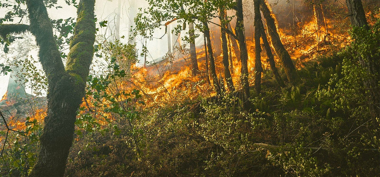 How Drones are Useful in Forest Fire Response
